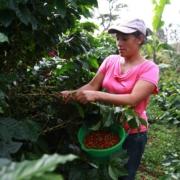 Nexo hará el primer censo de empresas cooperativas de Honduras
